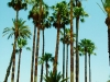 palmsofoujda