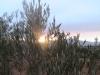 paysage-arbre-crepuscule