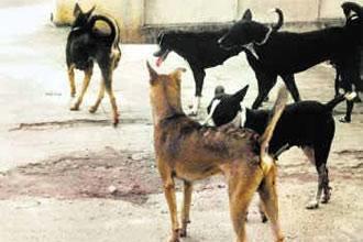 أرصفة الشوارع أَسِرَّة لمشردين وكلاب ضالة بوجدة