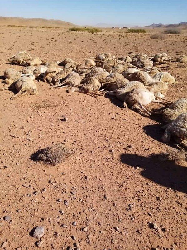 مأساة بدو اقليم بوعرفة- فكيك ومسؤولية الدولة !!